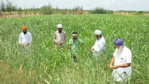 Workers from Punjab at Akal farm in Vallanthai village.